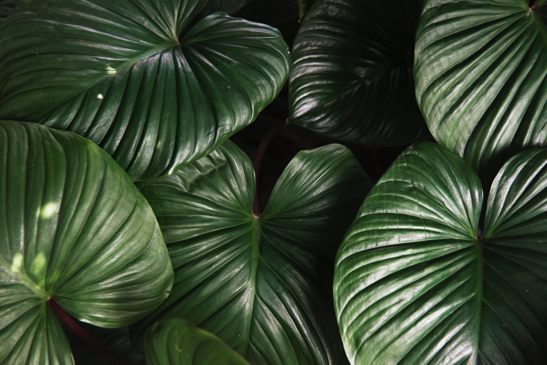 Botanische planten in huis