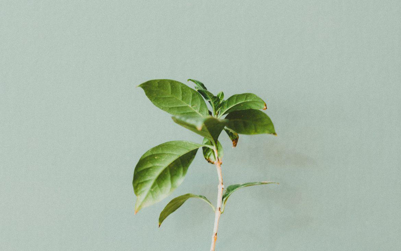 Groene plantenbladen op mosgroene muur voor de Urban Jungle inspo
