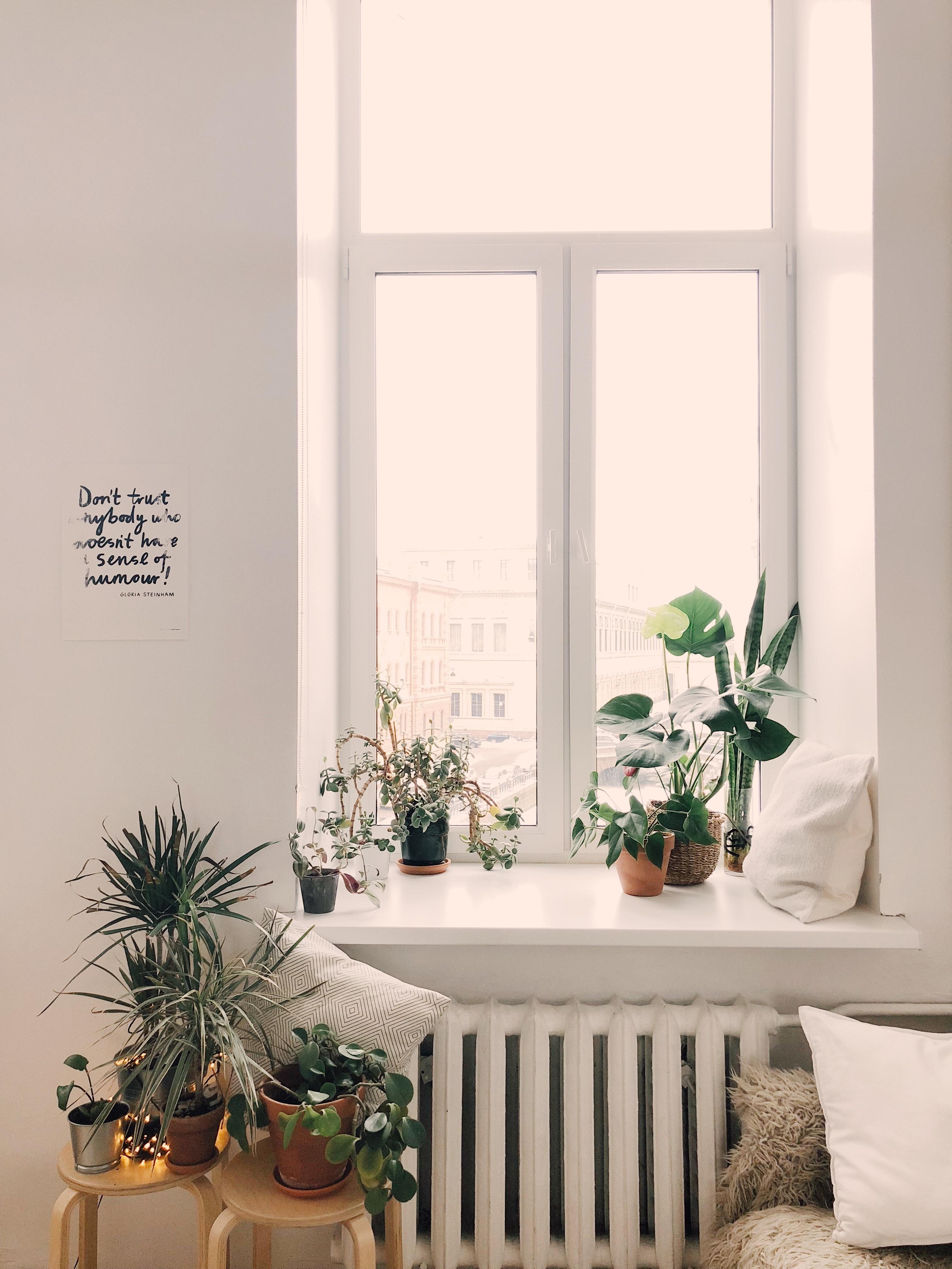 Een gezellige plantenboel voor de Urban Jungle woontrend. Creëer een Urban Jungle binnen mum van tijd