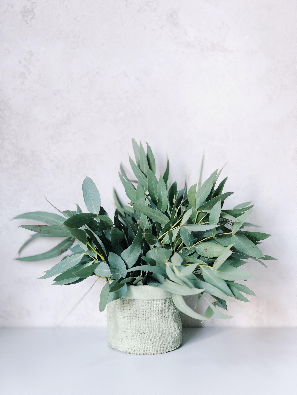 Een eucalyptus plant zorgt voor jouw Urban Jungle interieur